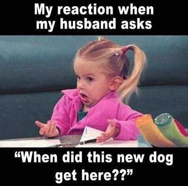 funny little girl meme...