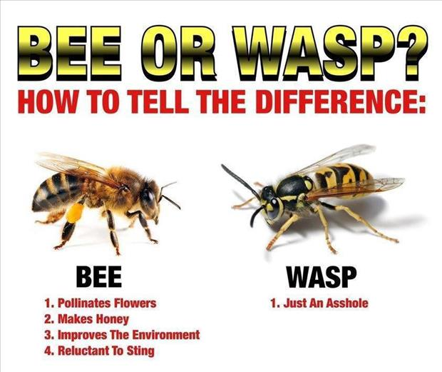 Wasp vs bee sting - photo#12