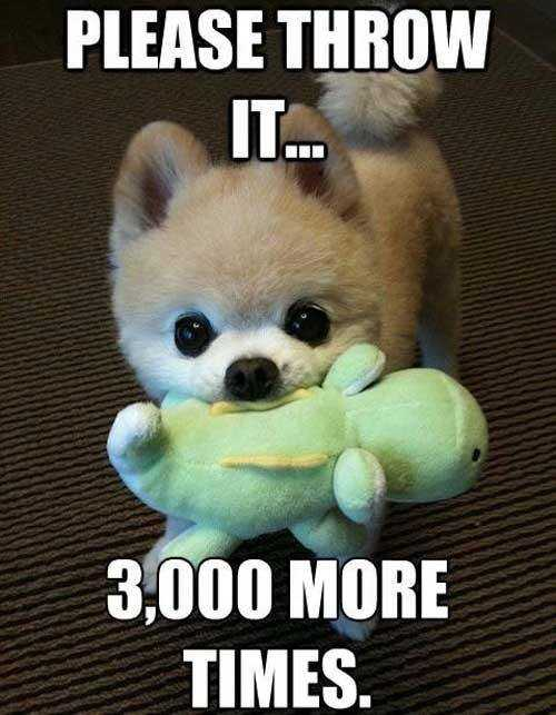 funny-puppy-throw-the-ball-meme.jpg