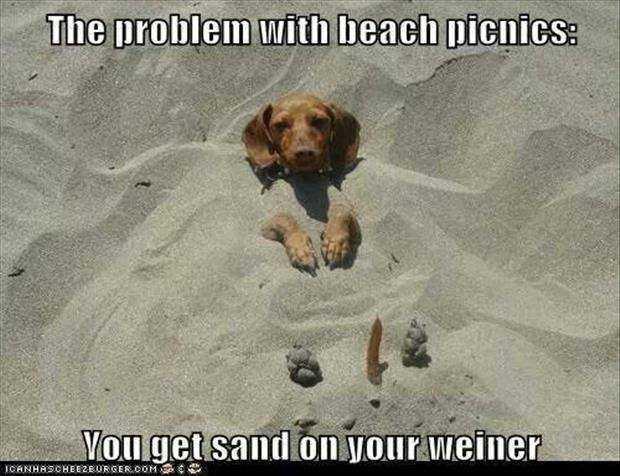 [Image: funny-weiner-dog-meme.jpg]