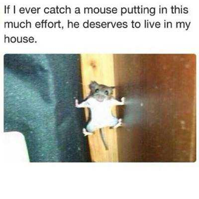 funny animals picture of the day (3)