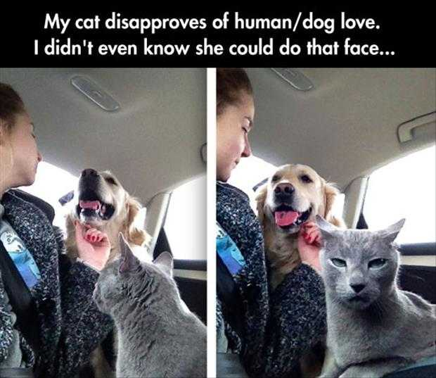 funny animals picture of the day (4)