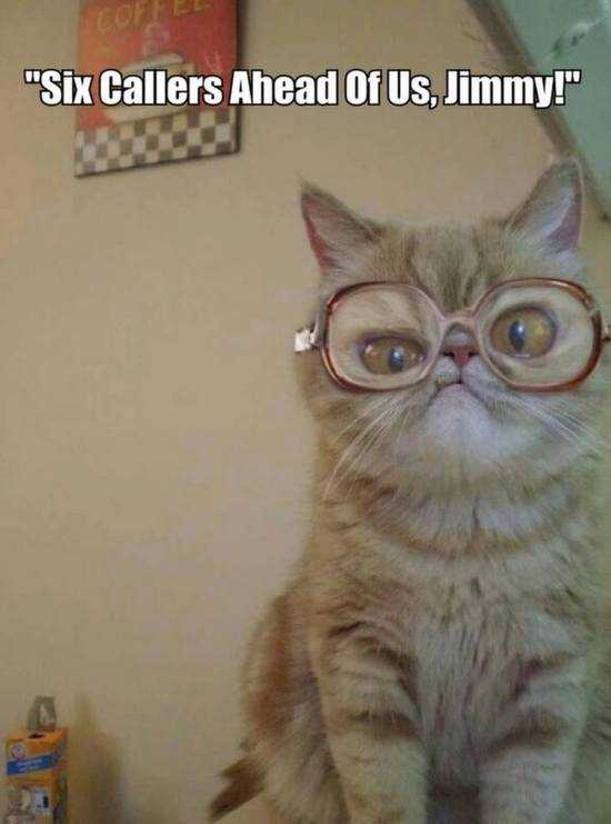 funny catwith glasses