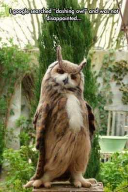 funny dashing owl