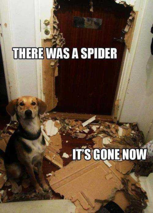 funny dog killed spider