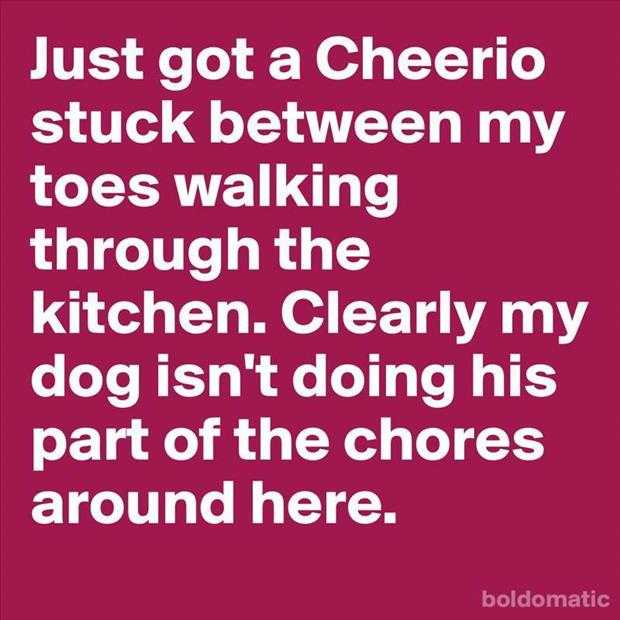 funny quote of the day (3)