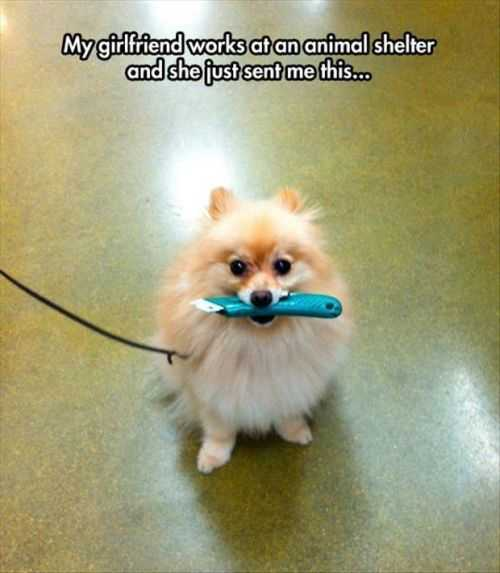 dog holding a knife