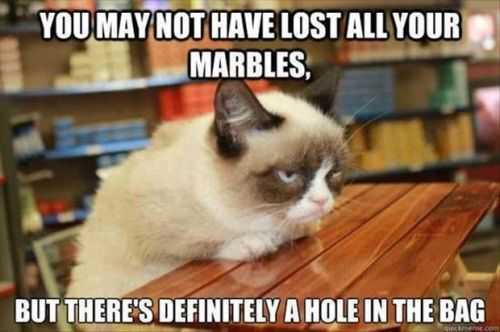 have you lost your marbles grumpy cat says so