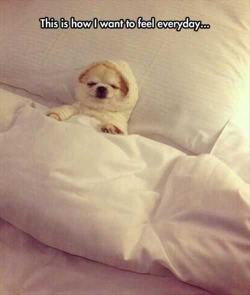 how i want to feel everyday. little dog in the bed Funny Pictures And Quotes Of The Week - 50 Pics