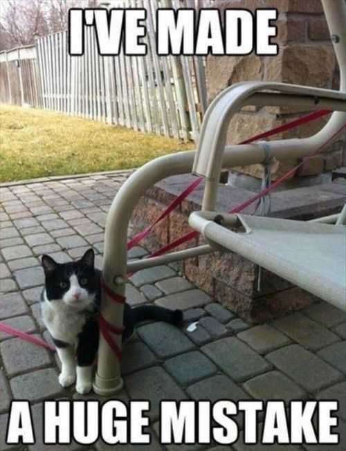 i have made a huge mistake. cat tangled in his leash Funny Pictures And Quotes Of The Week - 50 Pics