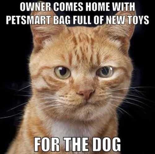 petsmart cat meme