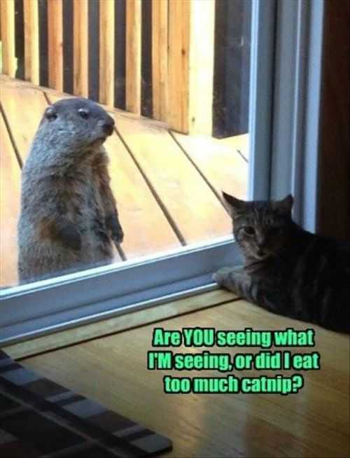 prarie dog at the door Funny Pictures And Quotes Of The Week