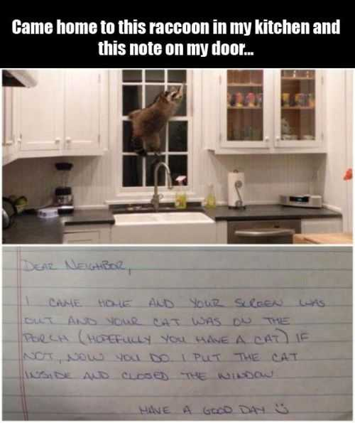 raccoon in my kitchen and this note on the door