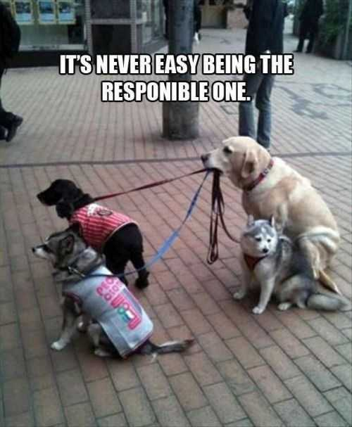 responsible dog walking other dogs