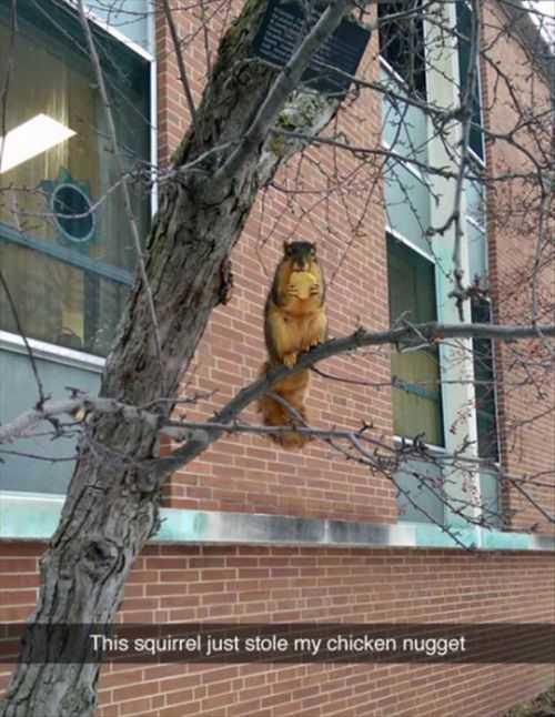 squirrel stole my chicken nugget