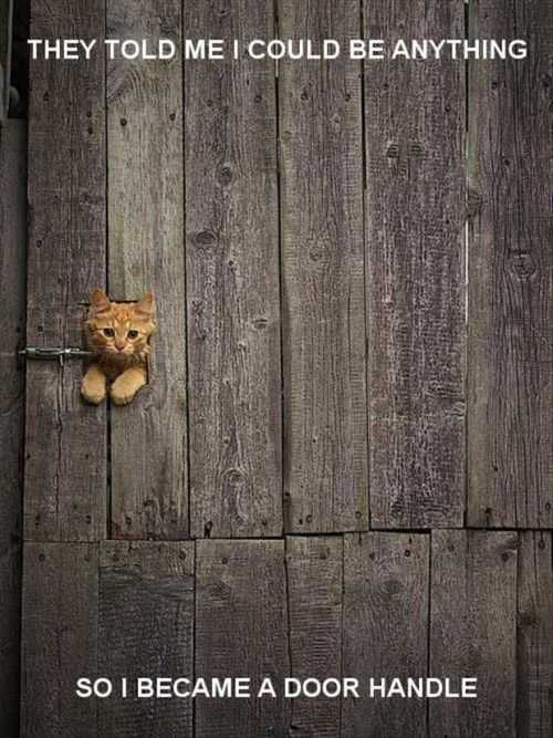 they said i could be anything so i became a door handle cat