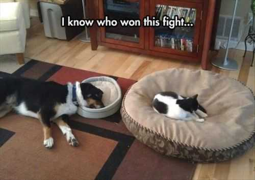 who won this fight with the dog and the cat Funny Pictures of The Week - 50 Pictures