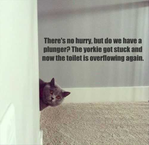 yorkie stuck in toilet funny cat Funny Pictures And Quotes Of The Week