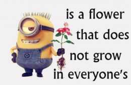Funny Minions Quotes Of The Week featured