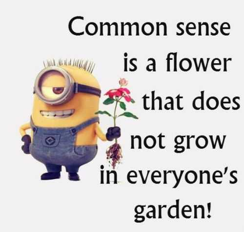 Minions Quotes Of The Day 323 Funny Minions Quotes Of The Week