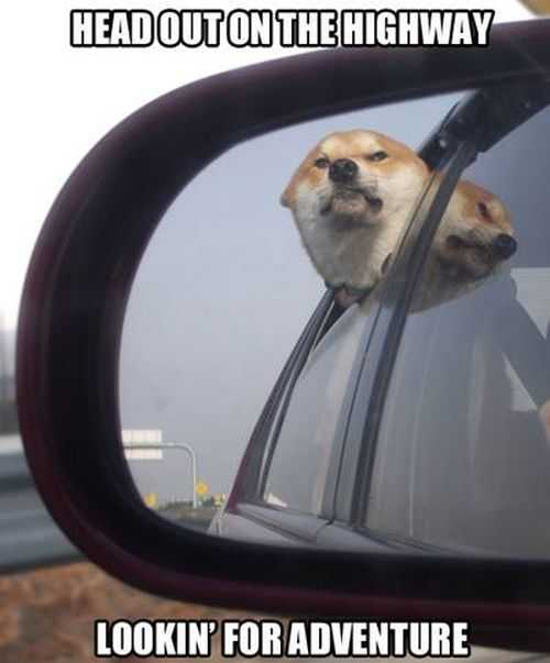 head out on the highway looking for adventure. funny dog with his head out of the window