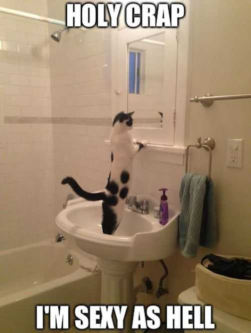 holy crap im sexy as hell. cat looking in the mirror