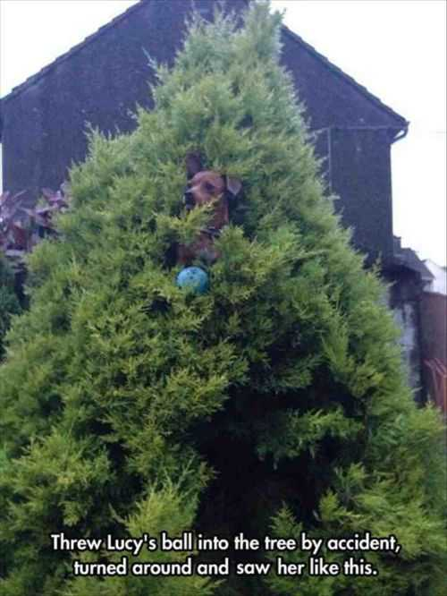 little dog climb tree to get ball The Funniest Pictures Of The Week