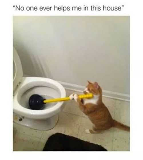 noone ever helps me around the house. cat using a plunger Funniest Pictures Of The Week