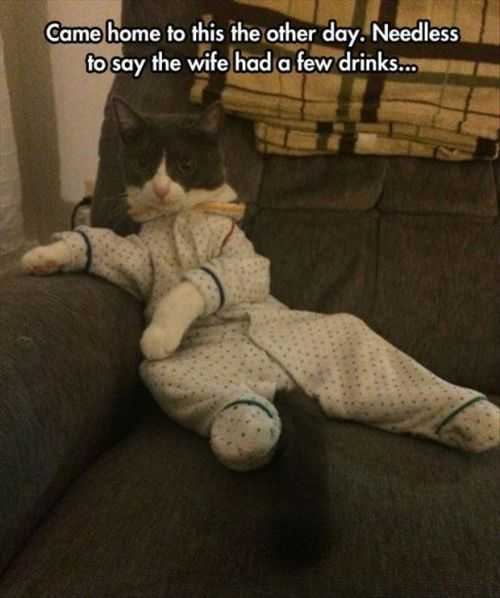 wife was drunk and dressed up the cat Funny Pictures And Quotes Of The Week