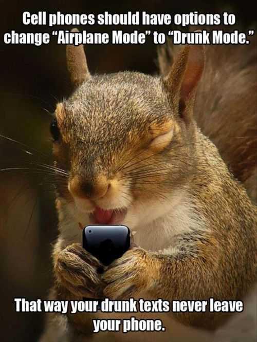 funny drunk-texting-squirrel