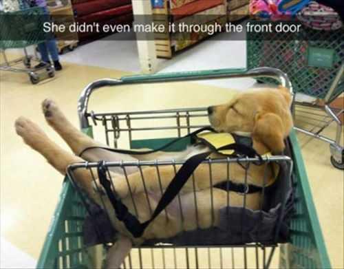 funny puppy pics