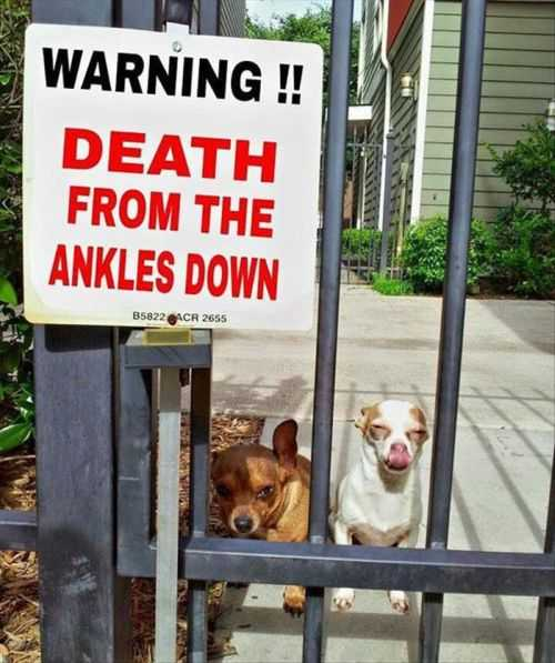 warning death from the ankles down   Funniest Pictures Of The Week