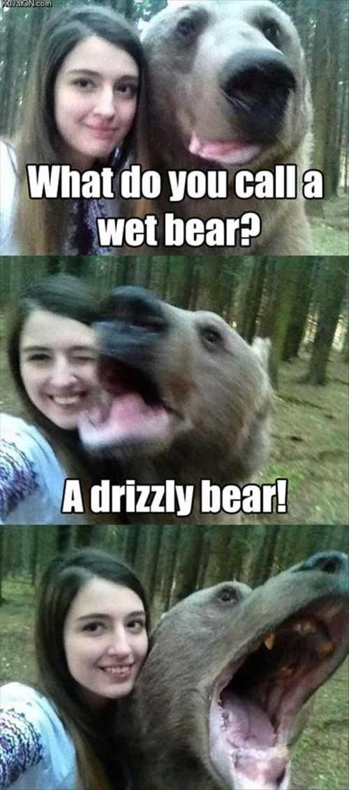 what do you call a wet bear funny joke