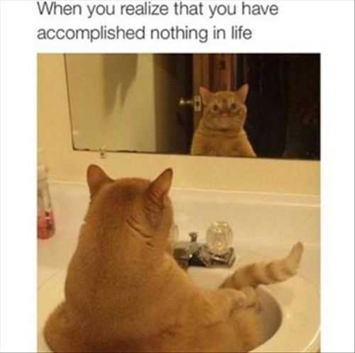 when you realize you have accomplished nothing in your life Funny Pictures Of The Week