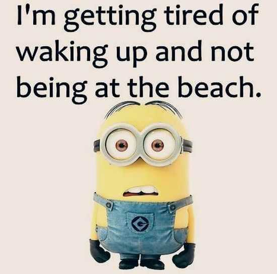 Big Funny Minions Pictures Post on Best Josh Images On Pinterest Free Items Cars And