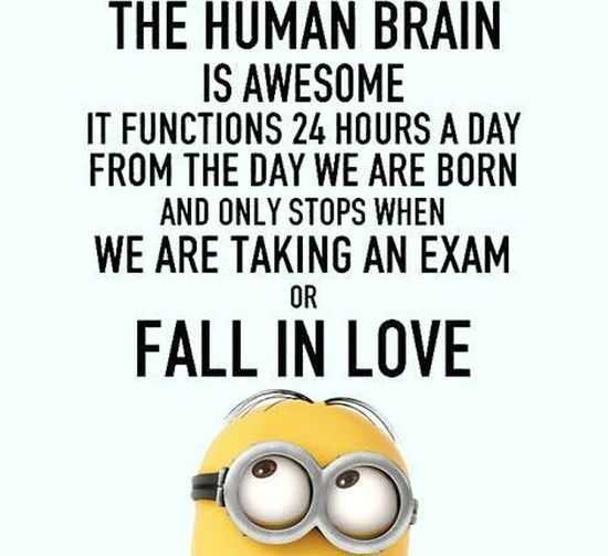Funny Minions Pictures And Funny Minions Quotes 046