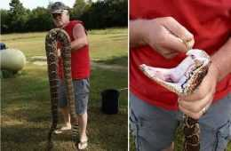 Giant Diamondback Rattlesnake Caught In Arkansas video featured