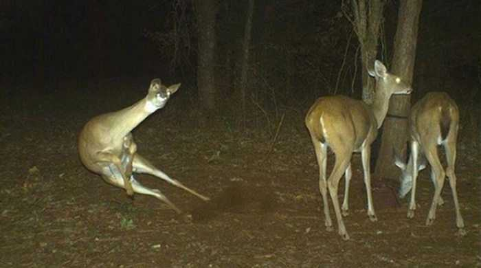 Crazy Trail Cam Pictures (1)