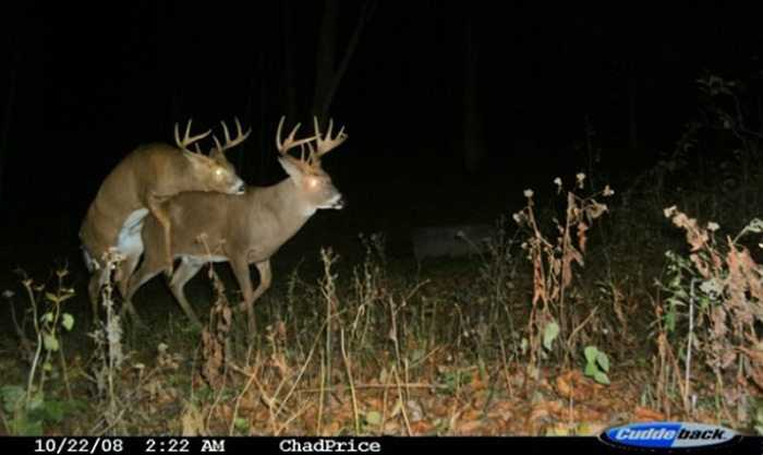 Crazy Trail Cam Pictures (11)