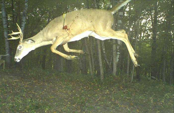 Crazy Trail Cam Pictures (12)