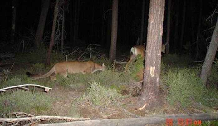 Crazy Trail Cam Pictures (13)