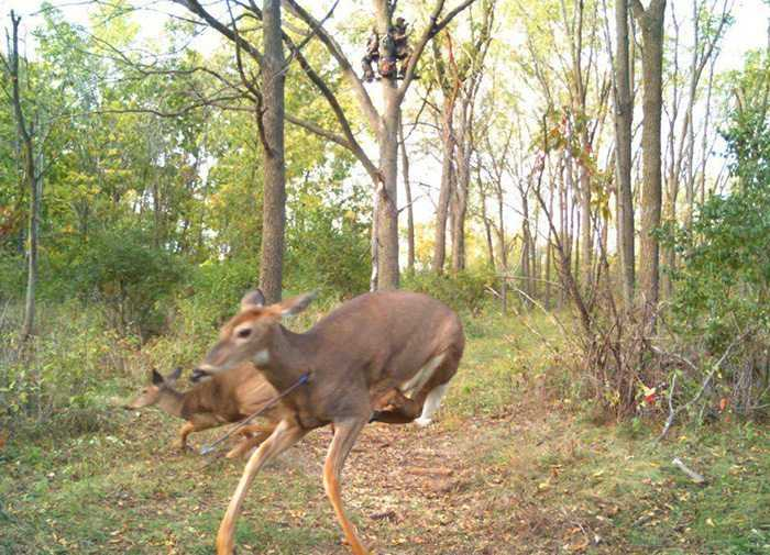 crazy trail cam pictures (14)