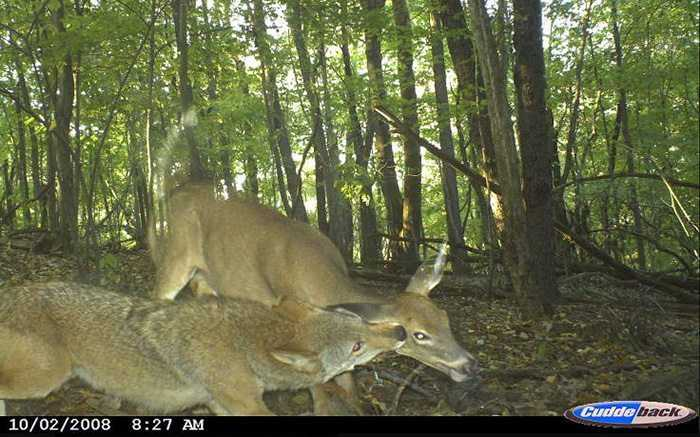 Crazy Trail Cam Pictures (15)