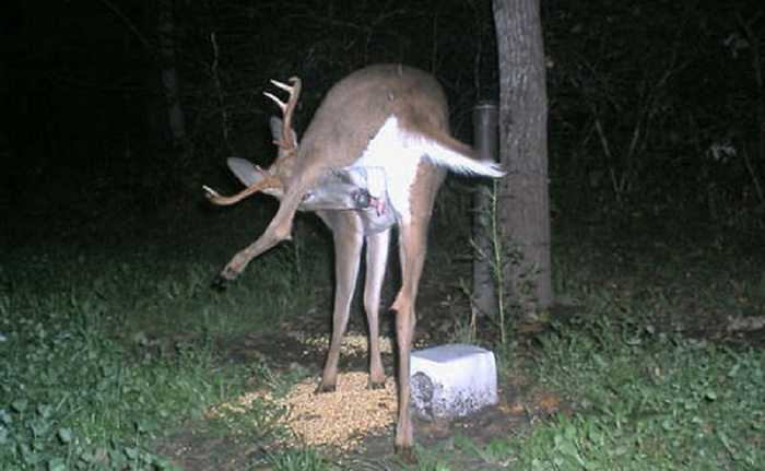 Crazy Trail Cam Pictures (2)