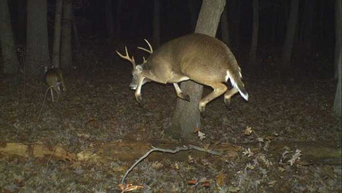 Crazy Trail Cam Pictures (3)