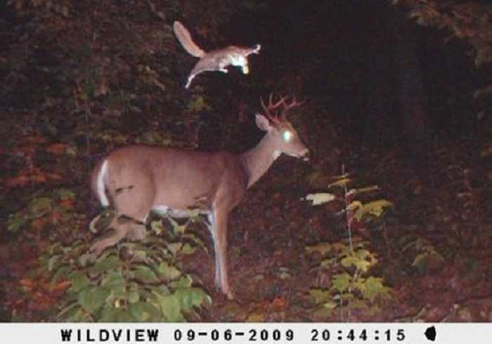 Crazy Trail Cam Pictures (8)
