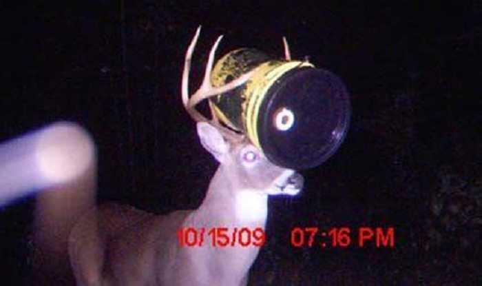 crazy trail cam pictures (9)