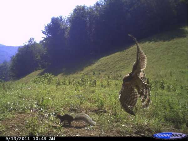 Funny and crazy trail cam pictures 001