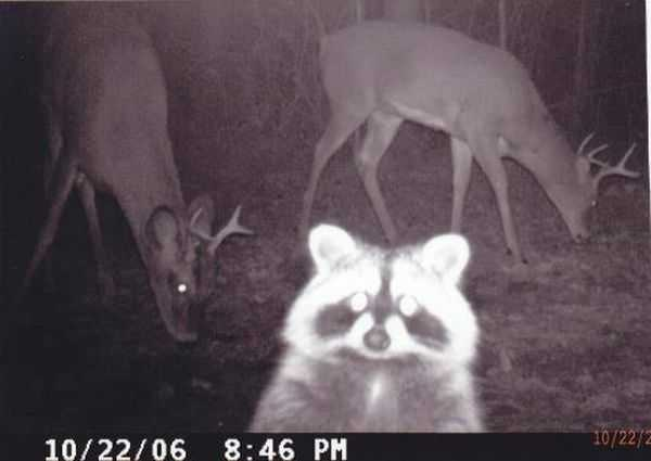 Funny and crazy trail cam pictures 002