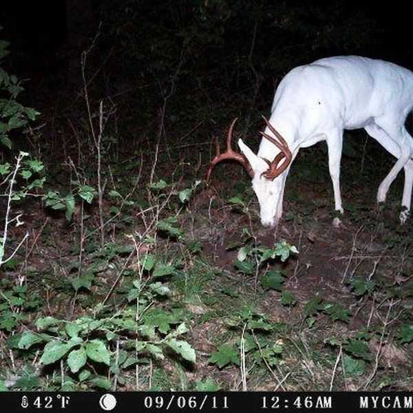 Funny and crazy trail cam pictures 003